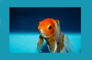 אוסנת רובין, שיטה להשגת ההצלחה אליה שואפים. דג זהב יכול לטרוף כריש